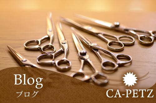 焼津市の美容室、美容院のCA-PETZ(ペッツ) 店舗ブログ